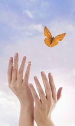 Papillon-libre-2