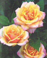 fleur 3 roses